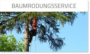 Baumrodungsservice